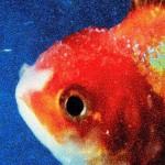Big Fish Theory